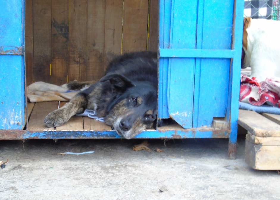Dogs move from street to shelter in Colombia