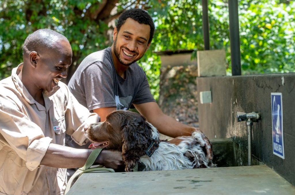 Dogs are saving endangered wildlife in Africa