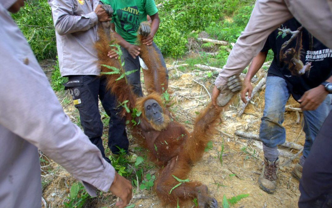 Palm oil: Consumers love it, but it costs the environment