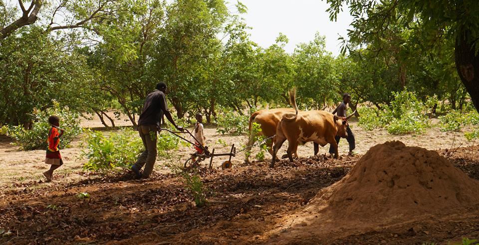 Mali Nyeta and building schools Progress in Africa3